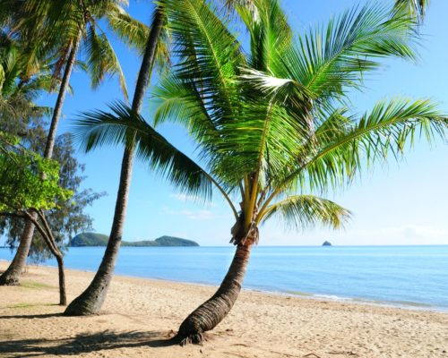 palm-cove-cairns-6